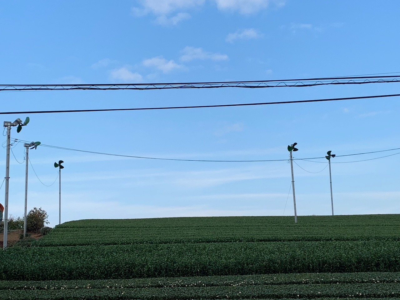 お茶畑にある扇風機って・・・何かのエネルギー? …